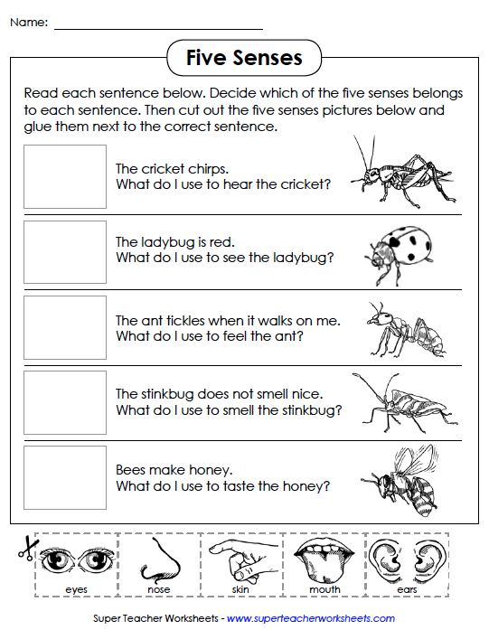 Review: Super Teacher Worksheets - Sensible Whimsy